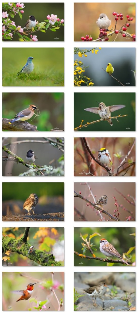 small-birds-theme-windows-2